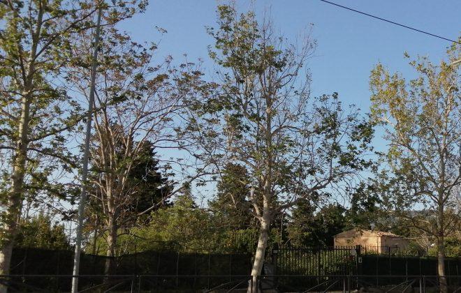 view of Villa Turrisi green area from via Leonardo da Vinci